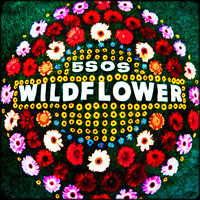 5 Seconds of Summer – Wildflower
